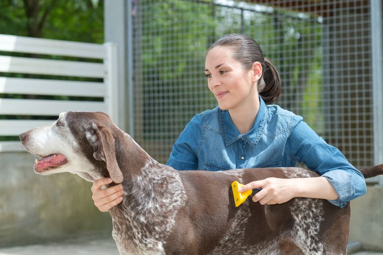 волонтер с собакой