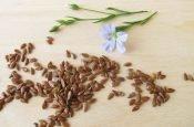 Калорийность семян льна