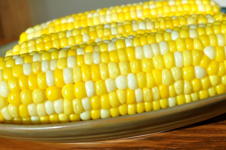 разноцветные кукурузные початки