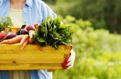 Топ-17 растительных продуктов для похудения