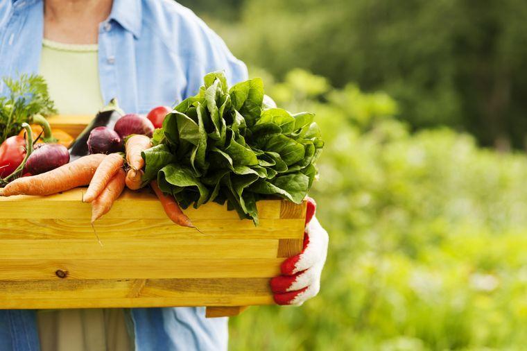 растительные продукты для похудения