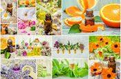 7 трав, которые помогут быстрее избавиться от лишнего веса
